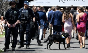 A police sniffer dog at Royal Randwick Racecourse in Sydney, Saturday, October 19, 2019.