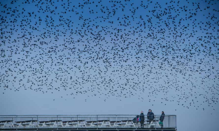 Lots to look out for … birdwatchers in Aberystwyth, Wales.