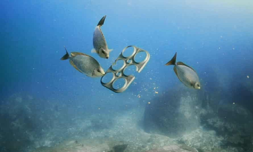 Edible six pack being eaten by fish.