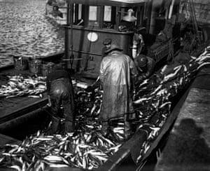 A large mackerel catch
