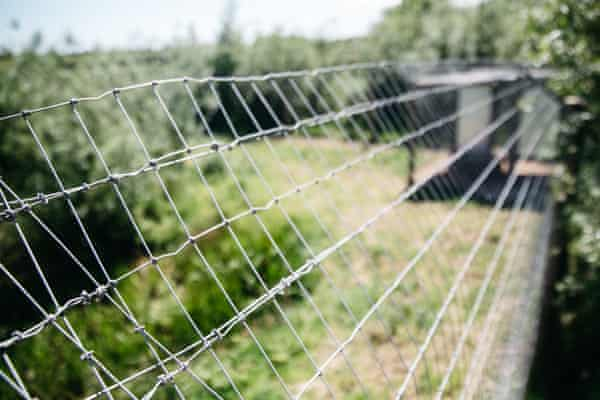 The wire fence around the lynxes' enclosure at Gow's farm.