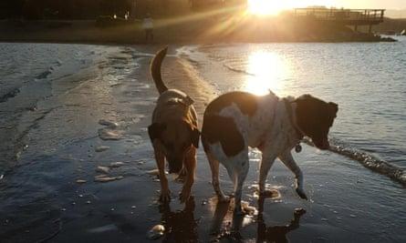 Yogi (left) and Pepper.