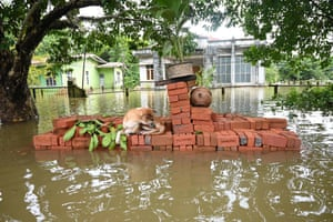 Bago, Myanmar: A dog rests on a pile of bricks as floodwater rises
