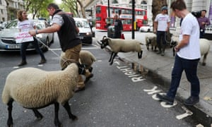 Protesters in London after the news that a no-deal Brexit could put half of Britain's farms out of business.