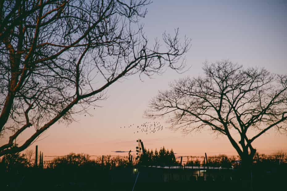 A flock of birds flies at dusk from the parking lot of a Petco store in Chico, California, last month.