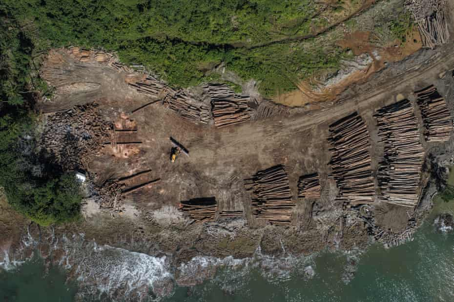 China regularly claims more than 90% of the total tonnes of wood exported by Papua New Guinea and Solomon Islands.
