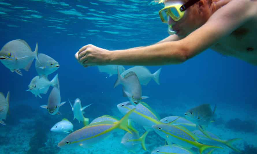 Snorkeling in the Bay of Pigs