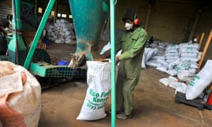 Man bags up croton nuts for fertiliser use