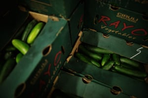 Cucumbers at the Second Harvest Food Bank in San Jose.