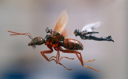 Paul Rudd and Evangeline Lilly in the buoyant and manoeuvrable Ant-Man and the Wasp.