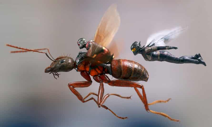Buzzing … Paul Rudd and Evangeline Lilly in Ant-Man and the Wasp.