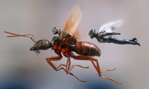 Exhilarating action … Ant-Man and the Wasp.