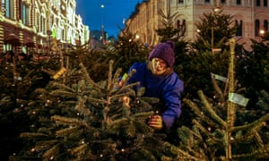 man shopping for trees in a market