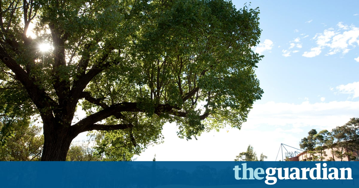 Stressed Street Trees Mapping The Urban Forests To Save Them - Us government tree map