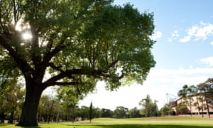 One of Melbourne's elm trees that's part of the city's Urban Forest Visual project
