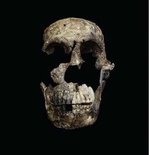 "The ""Neo"" skull, a nearly complete adult Homo naledi skull found in the Lesedi Chamber."