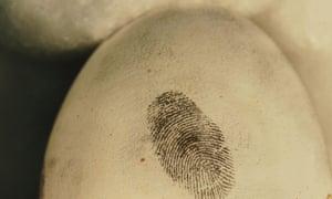 A fingerprint on a golden eagle egg – recovering such prints could help tackle wildlife crime.