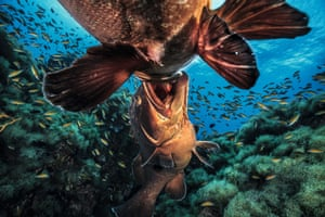 Big fish fight by Jordi Chias Pujol.