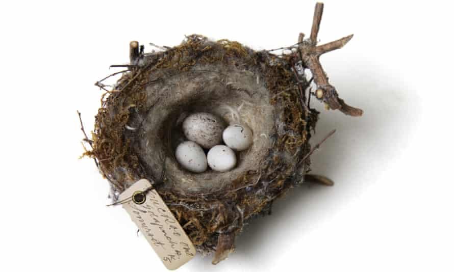 'Nests were like bruises: things I couldn't help but touch, even though I didn't want them to be there.'