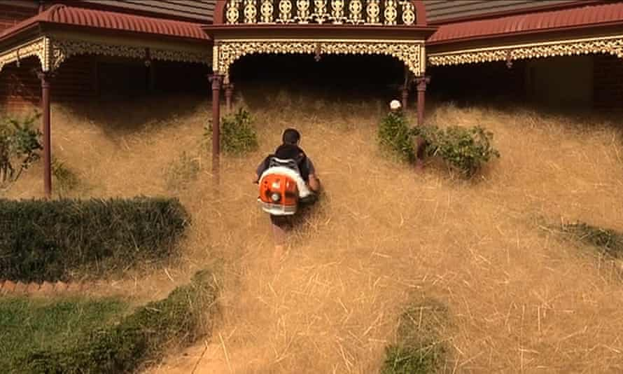 A man clearing out fast-growing tumbleweed from a home in the town of Wangaratta.