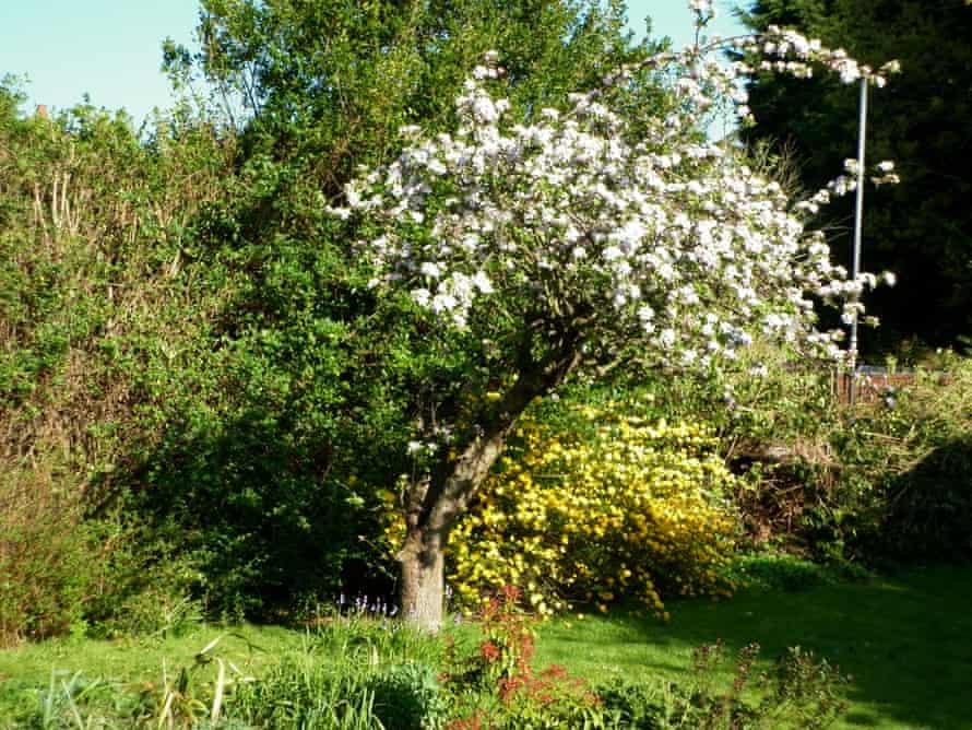 Jonathan Best's garden in Eltham.