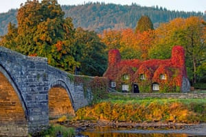 Llanrwst, Wales: A view of Tu Hwnt l'r Bont Tea Rooms, which is covered in Virginia creeper that has started to change colour for autumn