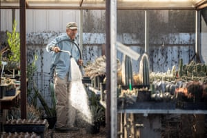 Gene Joseph, owner of the nursery 'Plants for the Southwest' in Tucson turns on his hose to water his Ariocarpus plants among other succulents in one of his greenhouses.
