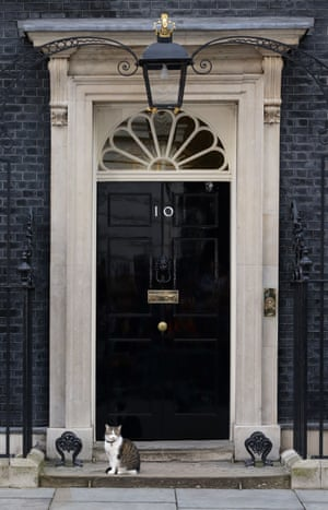 On the morning after the EU referendum, David Cameron was nowhere to be seen but Larry was on the steps of number 10