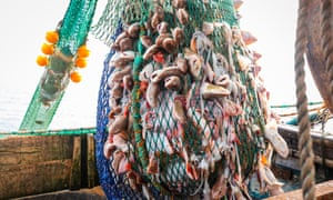 a net full of fish on a trawler