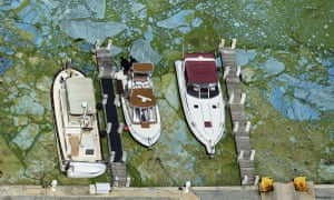 Boats docked at Central Marina in Stuart, Florida, are surrounded by blue green algae Wednesday.