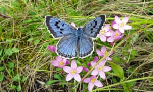 A large blue butterfly.
