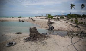 Stumps of dead palm trees lie beside the road to Tebikenikoora village. During high tides the village gets flooded and people's homes, most of which are built on stilts, become temporary 'islands'.