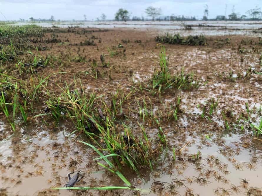 Spiders climb to escape floodwaters in Kinchela on the NSW mid-north coast