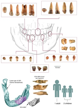 Hominin fossils from Mata Menge (images courtesy of Yousuke Kaifu; Susan Hayes prepared the topmost panel).