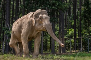 69-year-old Asian elephant Shirley