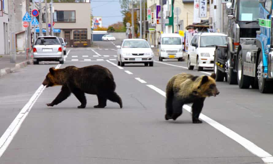 Two bears walk down the street in Shari town in Japan's northern island of Hokkaido. A bear in Akita prefecture is believed responsible for the death of four people in three weeks.
