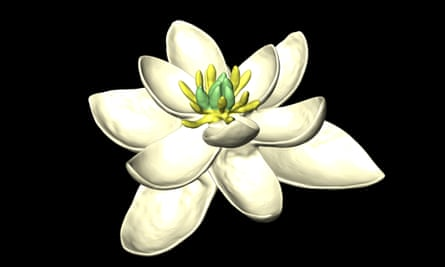 A model of the flower reconstructed by the new study, showing both female (carpels) and male (stamens) parts, and multiple whorls of petal-like organs, in sets of threes.