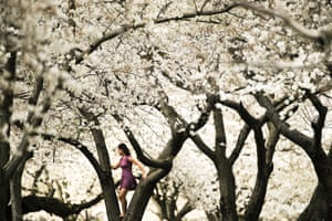 A woman climbs on the bough of a tree in Philadelphia, US