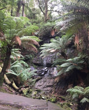 A waterfall tucked away in Tarra valley rainforest