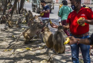 Men give bananas to monkeys gathered on the side of the road in New Delhi, India as the country remains under coronavirus lockdown