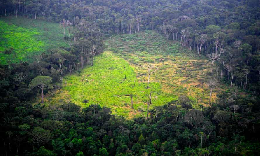 A deforested coca field in Colombia