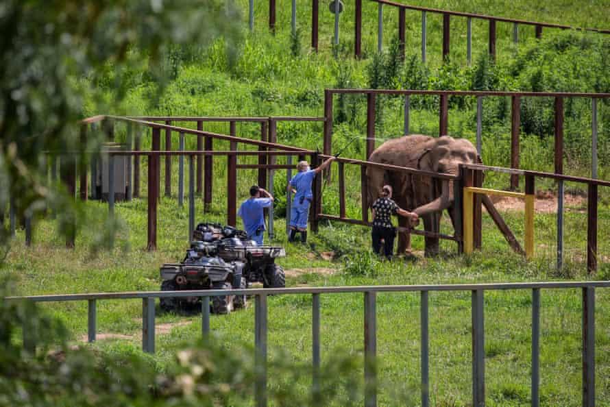 Elephant and keepers at the Elephant Sanctuary, Hohenwald.