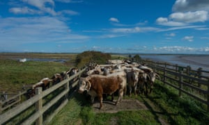 Steart Marshes in Somerset