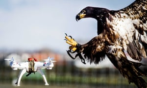An eagle grabs a hovering drone during a police exercise in Katwijk in the Netherlands