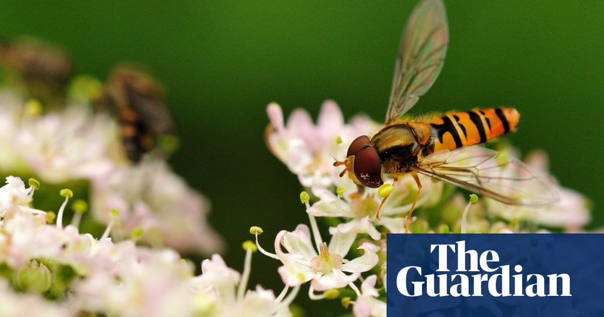 Widespread losses of pollinating insects revealed across Britain