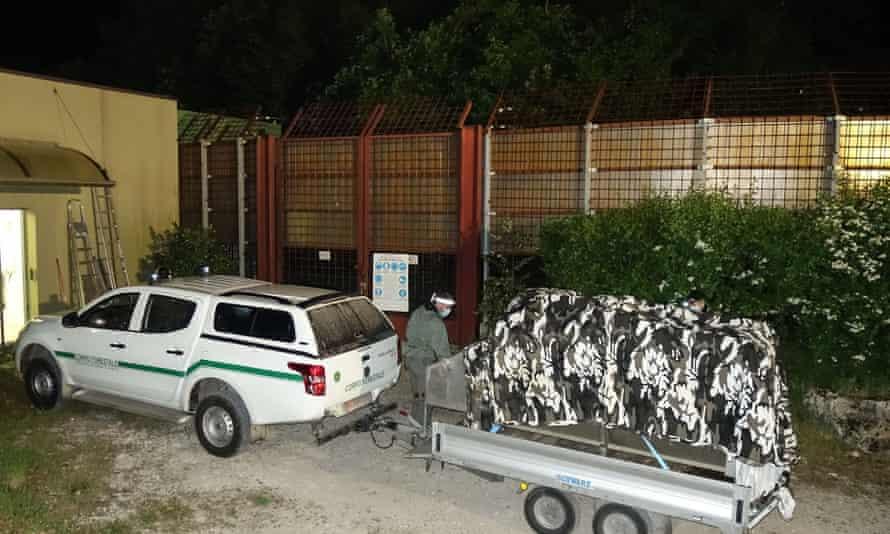 M49 being returned to Casteller Wildlife Centre