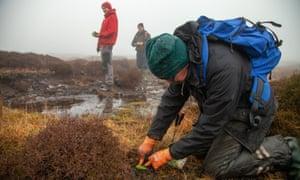 Sphagnum moss is planted on Marsden Moor
