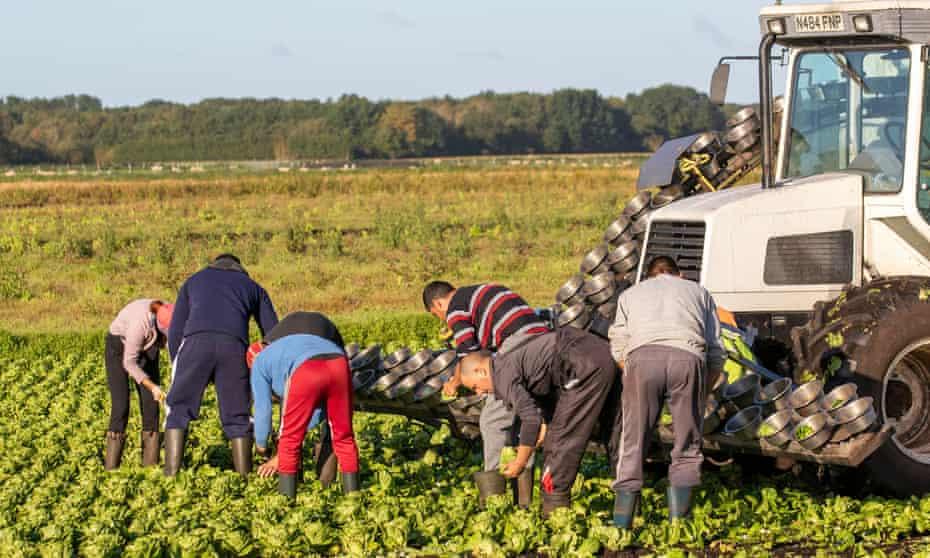Crop pickers in Lancashire