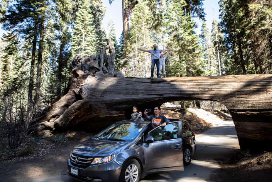 Tunnel Log was created in 1938, from a sequoia that fell over the road in 1937