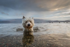 Tom Lowe's four-year-old westie, Baxter, emerging from Loch Lomond won first place in the dogs at play category